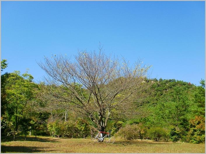 s-20101007 063.jpg